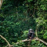 Kongo will von Kobalt-Absatz profitieren