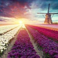 Niederlande diskutiert Förderung von E-Autos