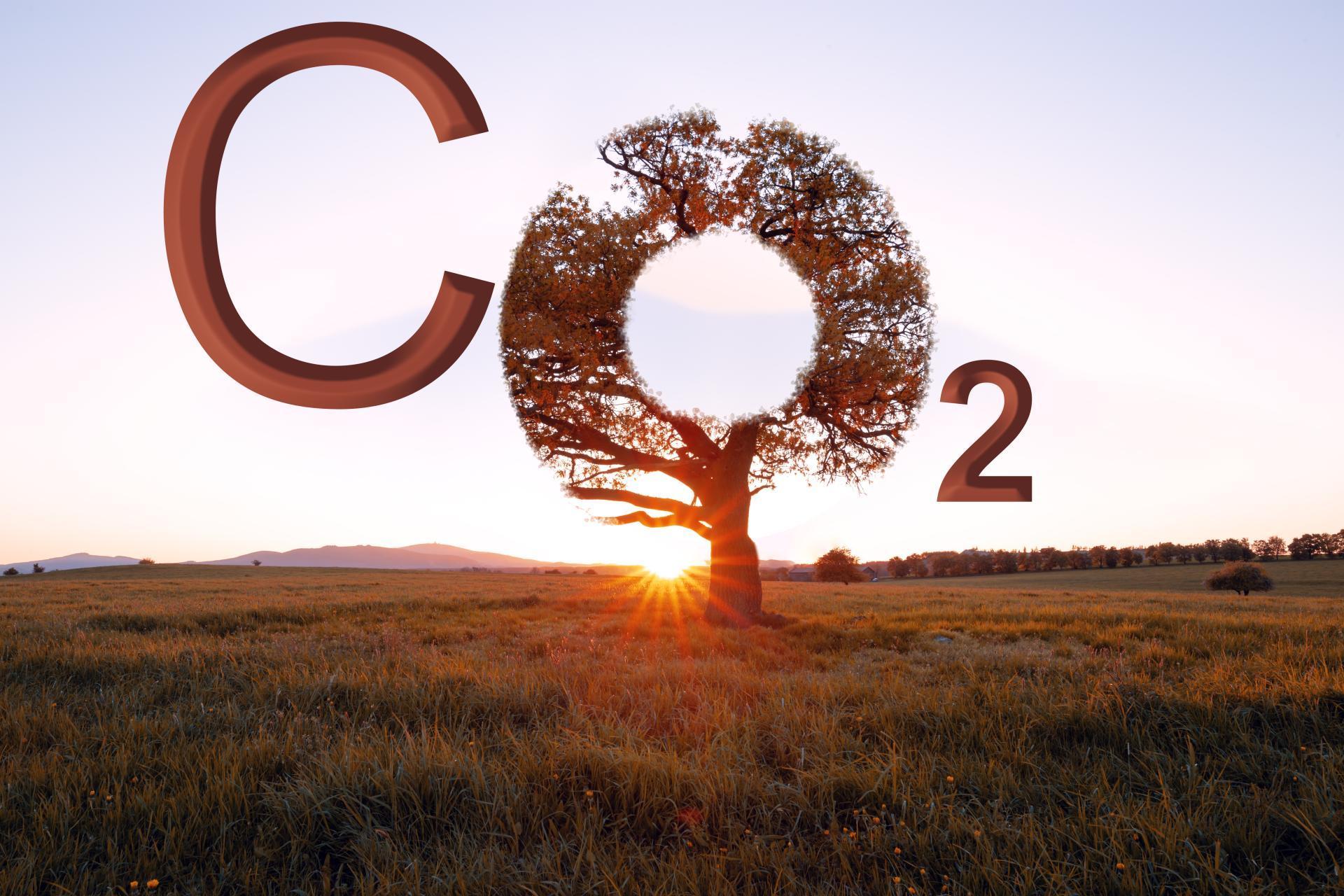 EU-Autolobby will CO2-Ziele wegen Corona-Virus aufweichen