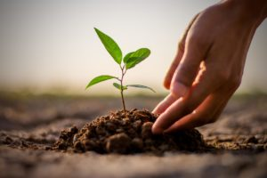 Redox-Flow-Batterien mit pflanzenbasierten Elektrolyten auf dem Weg in die Praxis